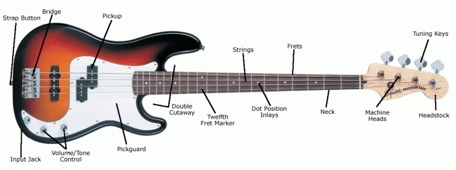 Sweetwater's bass guitar anatomy